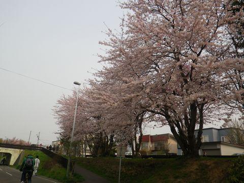 Blossom_e0026331_14364718.jpg
