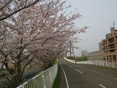 Blossom_e0026331_14364971.jpg