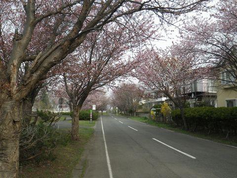 Blossom_e0026331_14365036.jpg