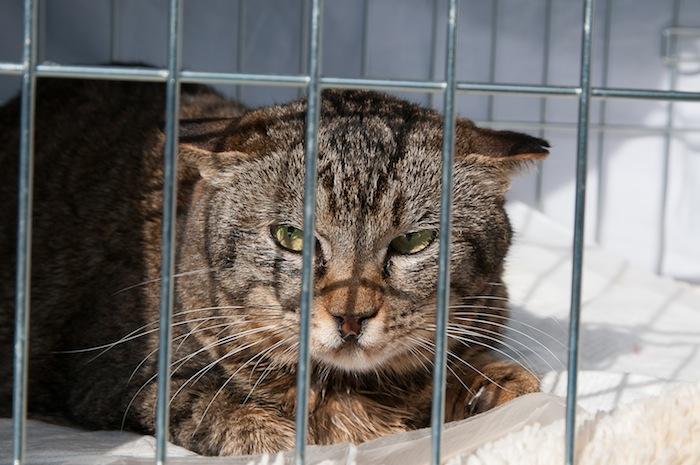 猫の避妊、去勢のススメ_d0073743_11315715.jpg
