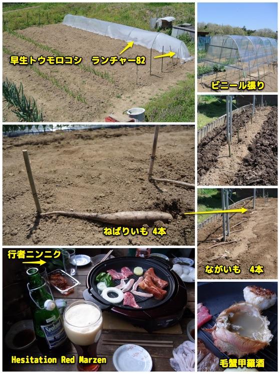 工作と畑が忙しい_c0063348_9264333.jpg
