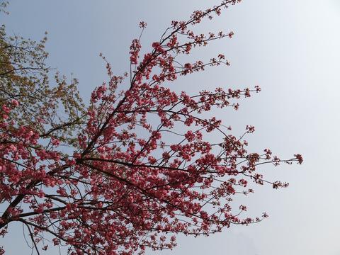 桜の季節展示会_a0233551_18142089.jpg