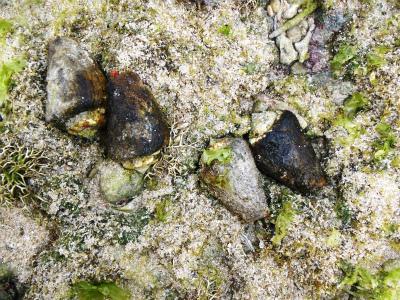 カーミージーの海の散策_c0180460_13513230.jpg