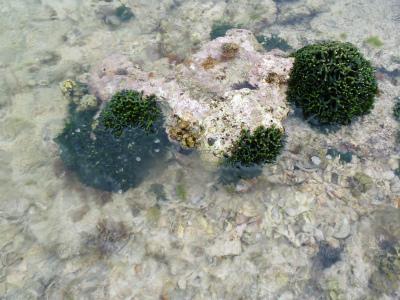 カーミージーの海の散策_c0180460_13553521.jpg