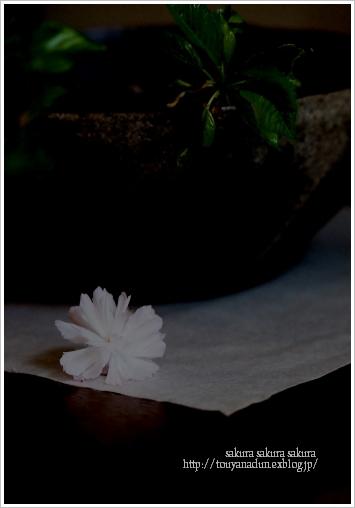砂化粧鉢_c0086062_8123126.jpg