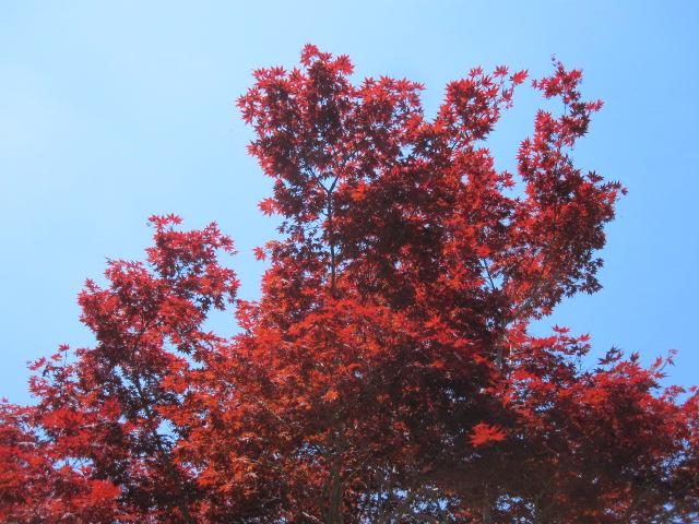藤も咲き始めました_f0085369_21122078.jpg