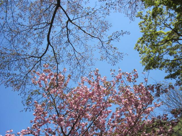 藤も咲き始めました_f0085369_2112452.jpg