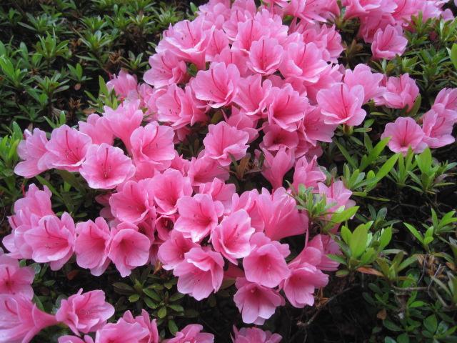 藤も咲き始めました_f0085369_21131751.jpg