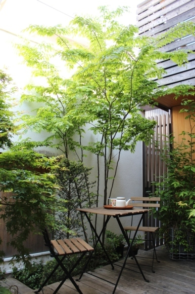 新緑の庭はより鮮やかに_c0310571_23551874.jpg
