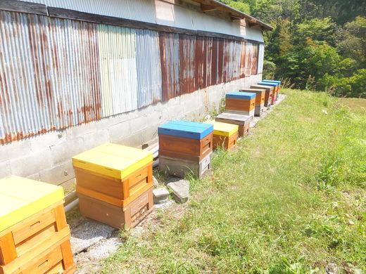 蜂さんのお嫁入り_d0251679_0155459.jpg