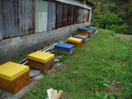 蜂さんのお嫁入り_d0251679_053641.jpg