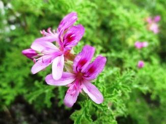 手間をかけるほど楽しい、趣味の園芸!_d0091909_16344850.jpg