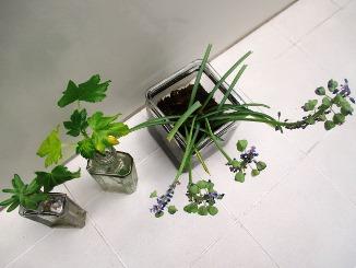 手間をかけるほど楽しい、趣味の園芸!_d0091909_16365287.jpg