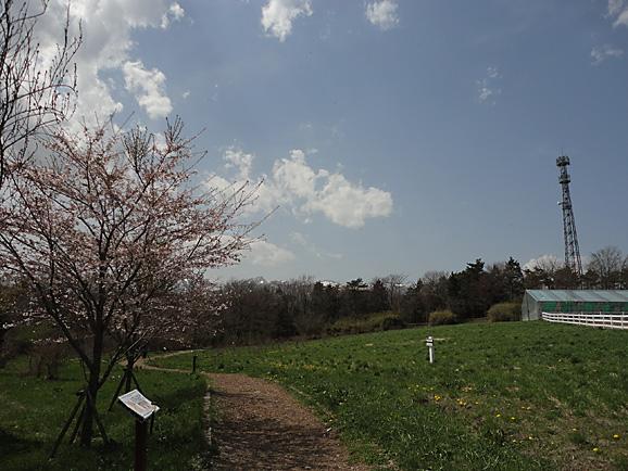 那須2015 アルパカ牧場_e0230011_10402340.jpg