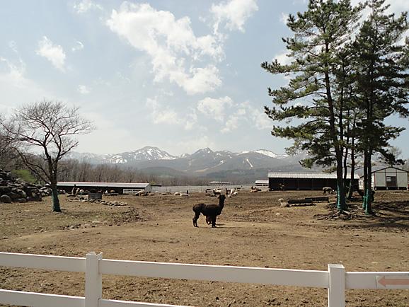 那須2015 アルパカ牧場_e0230011_10414754.jpg