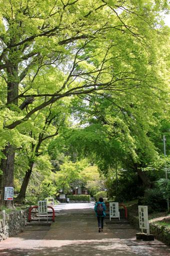 鷺森神社 新緑_e0048413_18542744.jpg
