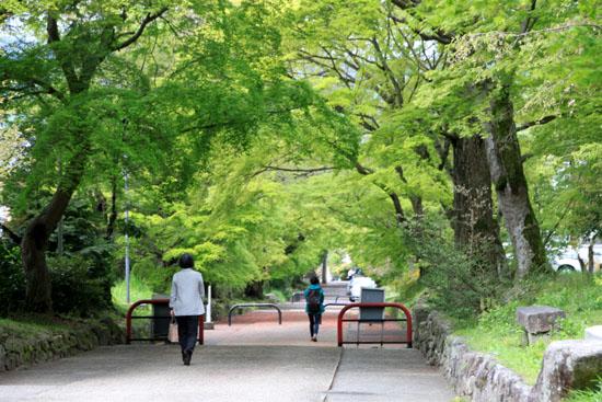 鷺森神社 新緑_e0048413_18553036.jpg