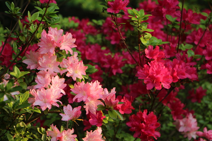 爽やかな季節 公園の早朝散歩で_d0150720_8531421.jpg