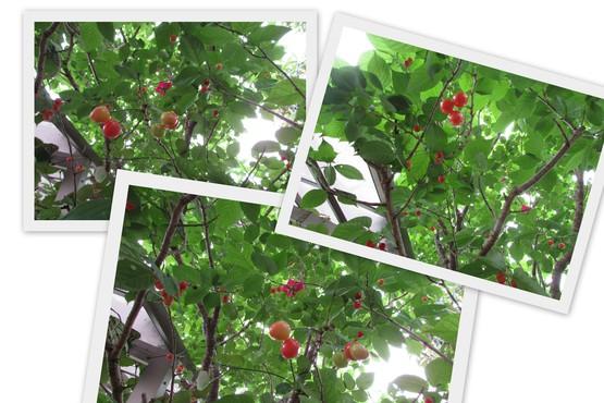 f0139520_2010640.jpg