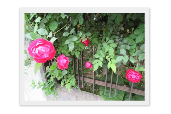 f0139520_20125313.jpg