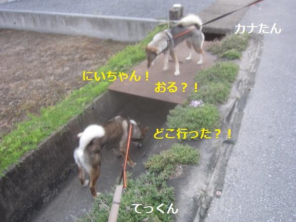 f0143123_1951481.jpg
