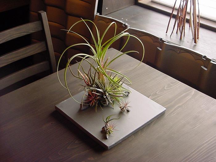 -kawara × air plants-_b0168041_17483780.jpg