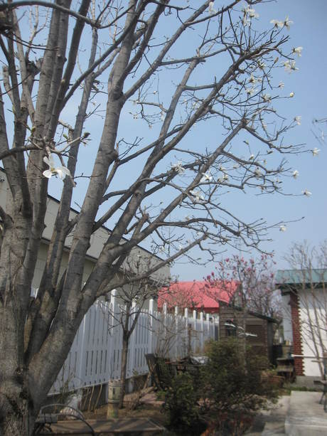お庭の木々にお花が咲きだした~&美瑛選果の買い物処理_a0279743_628486.jpg