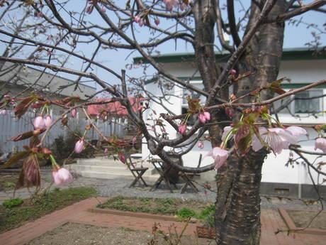 お庭の木々にお花が咲きだした~&美瑛選果の買い物処理_a0279743_6314061.jpg