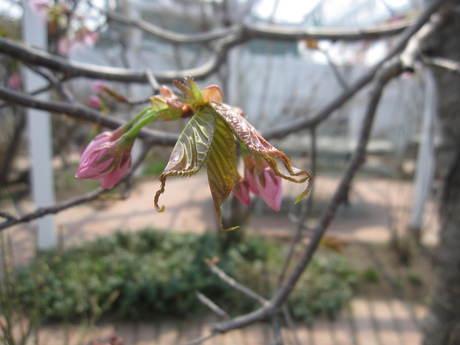 お庭の木々にお花が咲きだした~&美瑛選果の買い物処理_a0279743_6315249.jpg