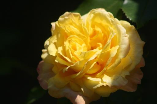バラの花も_c0329378_20083067.jpg