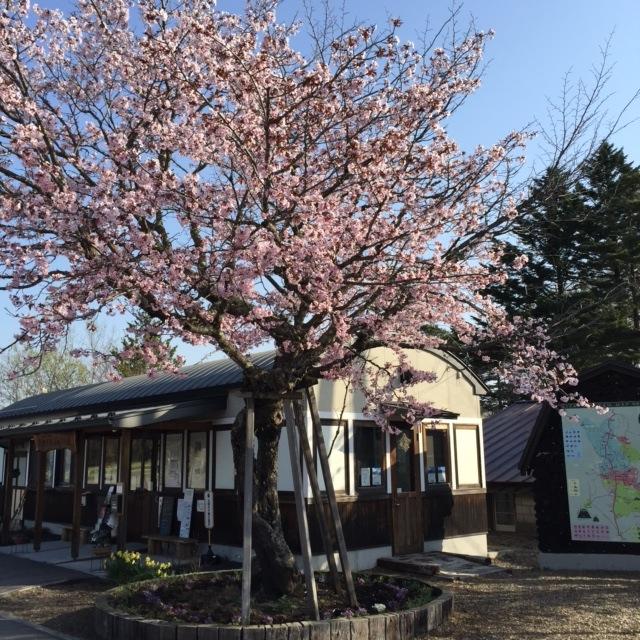 【ほんとうの春を待つための12章】〜最終章〜_d0028589_910432.jpg