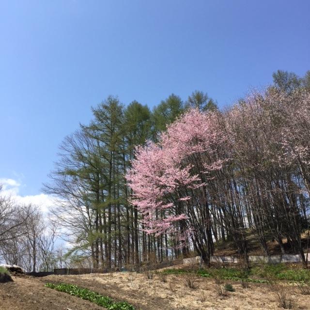 【ほんとうの春を待つための12章】〜最終章〜_d0028589_9115970.jpg