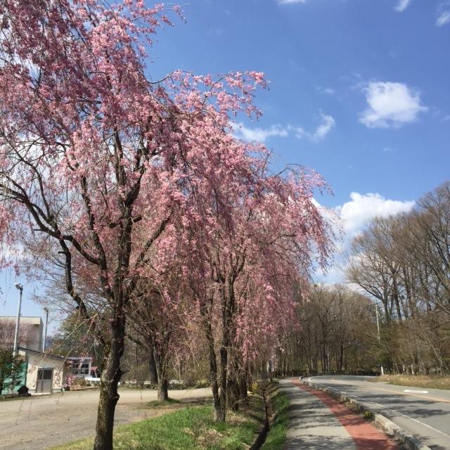 【ほんとうの春を待つための12章】〜最終章〜_d0028589_911867.jpg