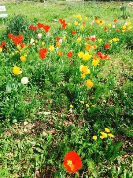 花は咲いていますか?_e0320890_16585226.jpg