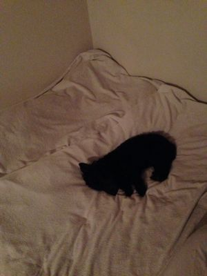 一番寝床_e0055098_9301863.jpg
