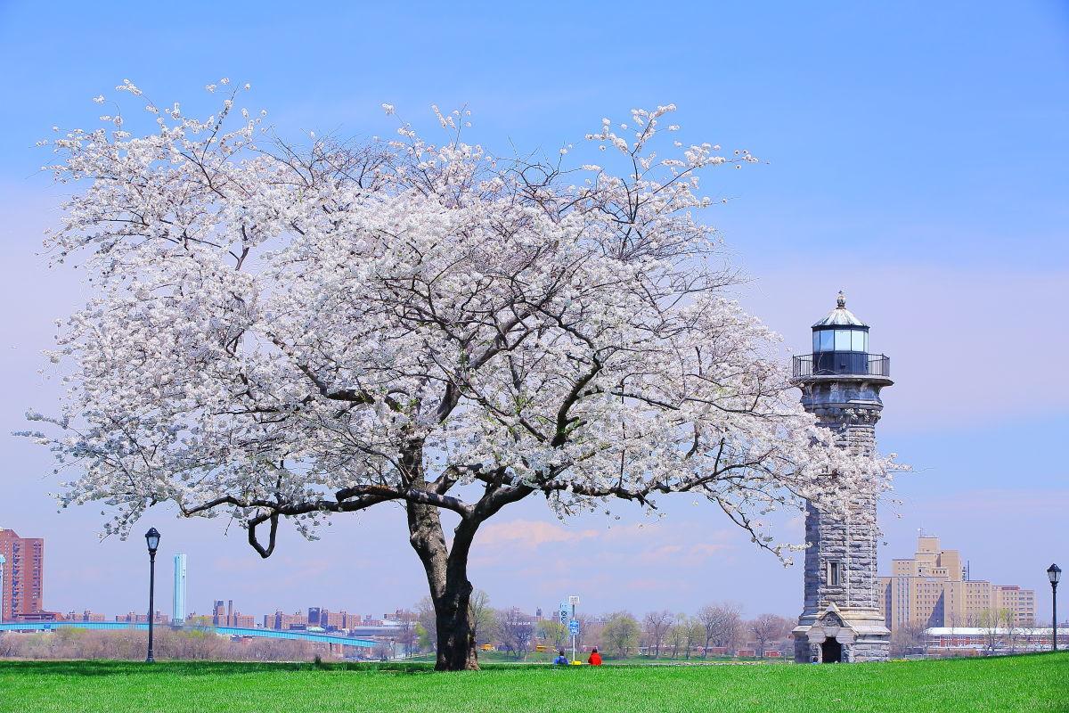 北の1本桜_a0274805_23063559.jpg