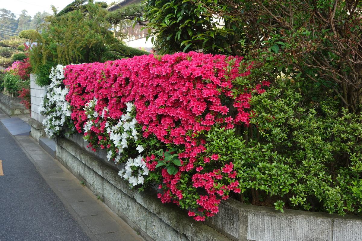 庭の花々_f0243509_12493939.jpg
