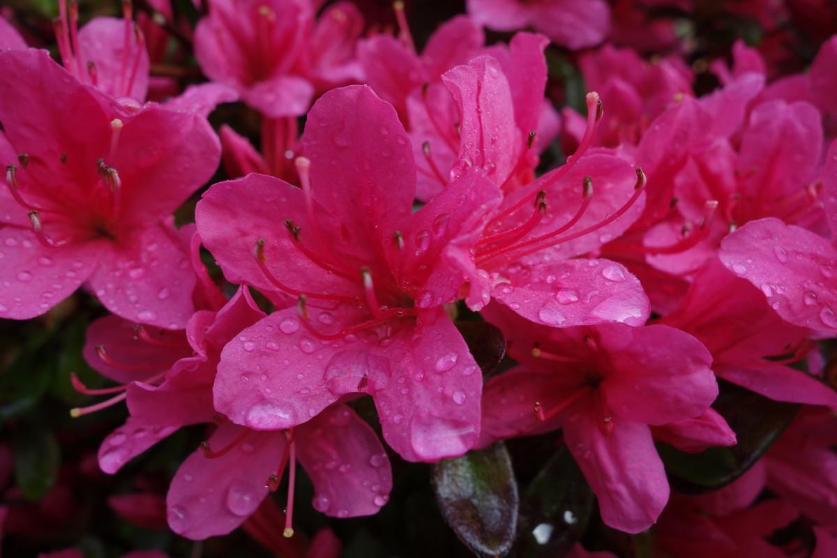 庭の花々_f0243509_12500100.jpg
