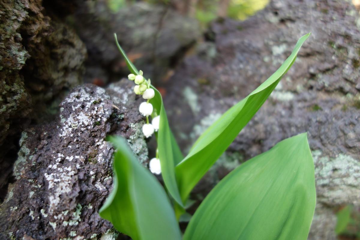 庭の花々_f0243509_12503055.jpg