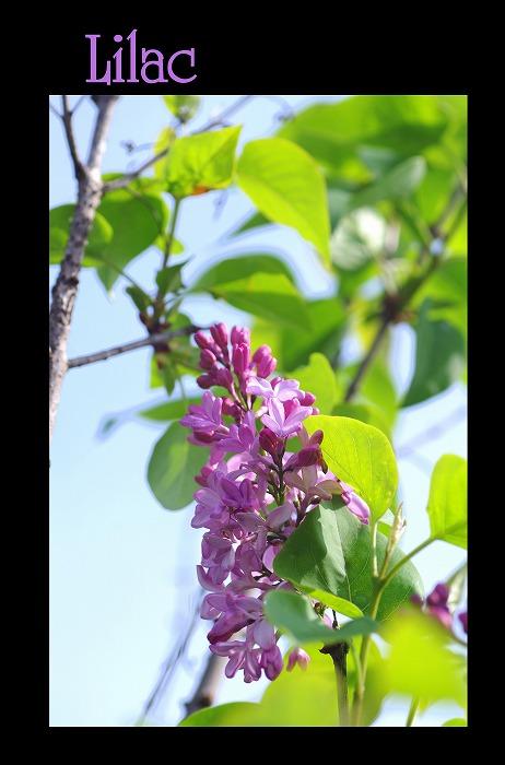 ピンク色の花々_d0147812_20145583.jpg