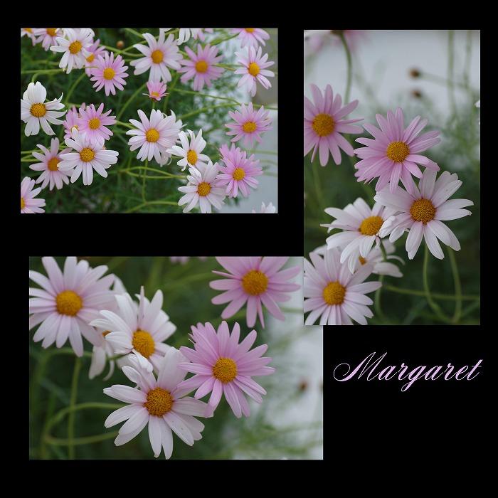 ピンク色の花々_d0147812_20154523.jpg