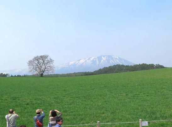 小岩井農場の一本桜_c0192215_15575241.jpg