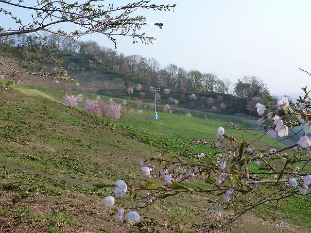 春、真っ盛り突入_c0048117_10375326.jpg