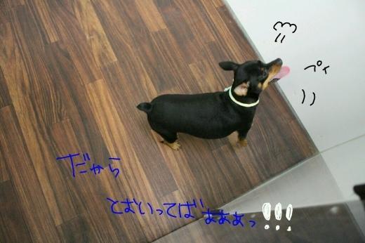 物欲…_b0130018_06352432.jpg
