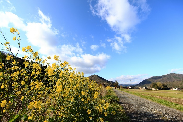菜の花のある風景_a0294534_20572335.jpg