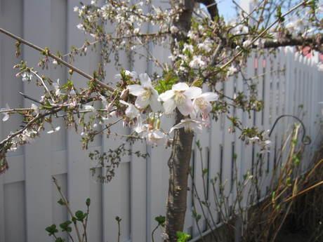 綺麗になって来たお庭で初ブランチ_a0279743_7204386.jpg