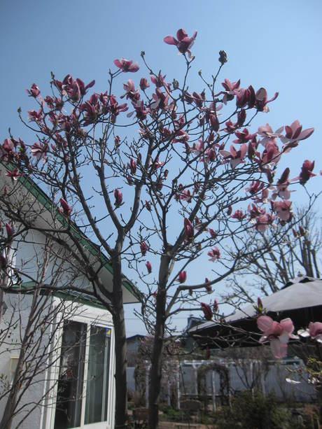 綺麗になって来たお庭で初ブランチ_a0279743_721258.jpg