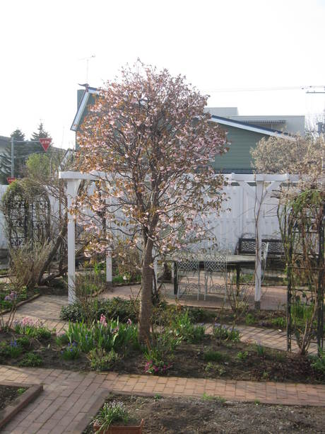 綺麗になって来たお庭で初ブランチ_a0279743_7234117.jpg