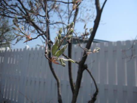 綺麗になって来たお庭で初ブランチ_a0279743_7271470.jpg
