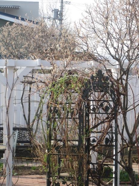 綺麗になって来たお庭で初ブランチ_a0279743_7342091.jpg